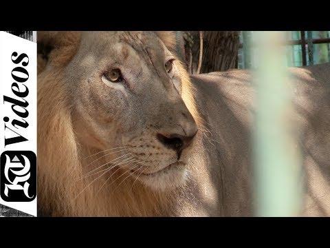Why you must visit the Dubai Zoo - Dubai Safari