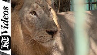 Why You Must Visit The Dubai Zoo   Dubai Safari