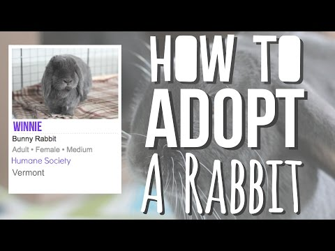 How To Adopt A Rabbit