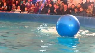 Как мы сходили на шоу про дельфинов.
