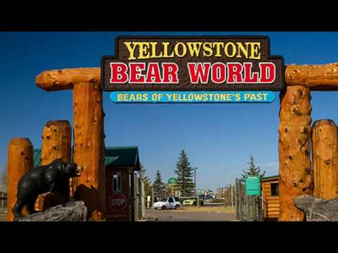 Bear World Idaho * Yellowstone Bear World * Yellowstone Bears