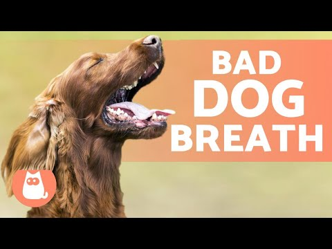 BAD BREATH In DOGS - 5 Tricks To GET RID Of It