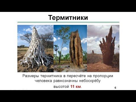 Механизмы формообразования архитектурных сооружений в живой природе Ермаченко П А   от 27 января 201