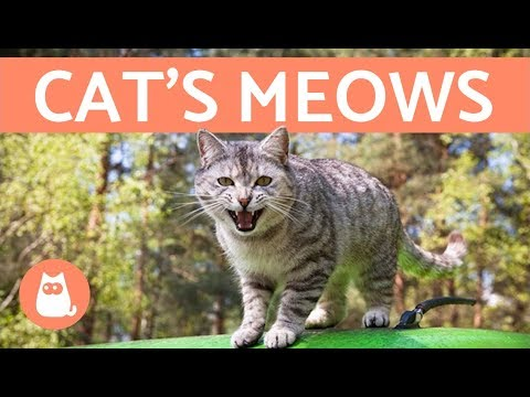 cat's-meows-and-what-they-mean