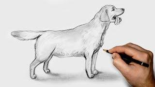 Как нарисовать Собаку карандашом Подробный урок для начинающих /How to draw a dog