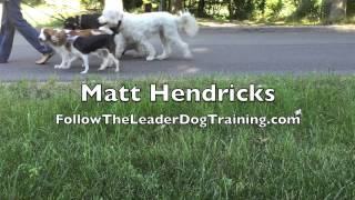 Are You A Leader Or A Follower? | Follow The Leader Dog Training And Rehabilitation Llc