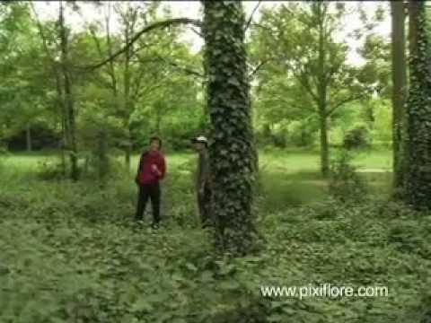 faune et flore dans le bois de vincennes 2 2 youtube. Black Bedroom Furniture Sets. Home Design Ideas