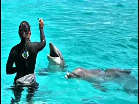 Royal Dolphin Swim at Sealife Park Oahu Hawaii