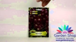Семена цветов Маттиоли фиолетовый (фиолетовый левкой)(http://goo.gl/1Q0Lbw Семена различных цветов Маттиоли - левкой седой, вы можете купить в магазине онлаин Сад сделок., 2016-01-24T11:16:17.000Z)