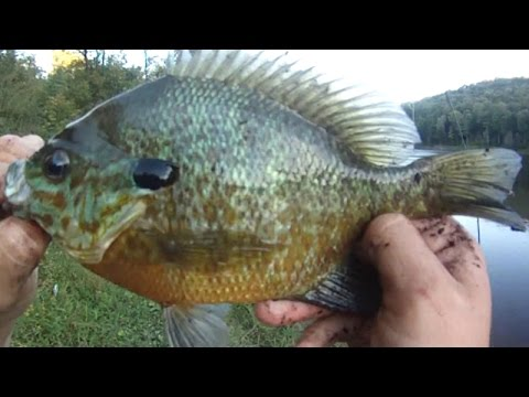 Outdoors channel trailer 3 hunting fishing and for Fishing youtube channels