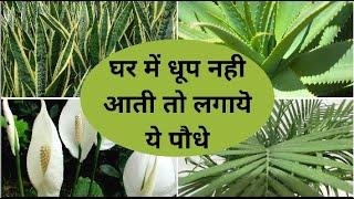 बिना धूप और देखभाल के आसानी से उगायें ये पौधे | Best Indoor Plants in India for Decoration
