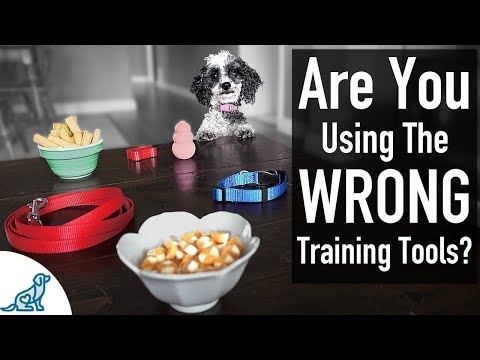The Best Puppy Training Leadership Tools - Professional Dog Training Tips