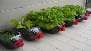 8 Vegetables You Can Grow In Your Tiny Apartment All Year Round