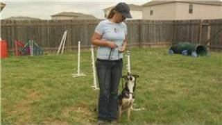 Dog Leash Training : Dog Leash Training: Serpentine & Figure 8 Turns