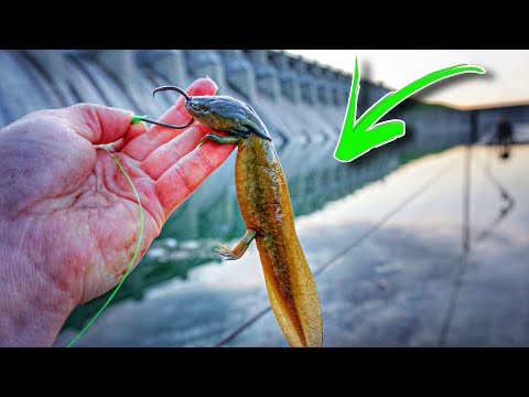 Strange LIVE BAIT Fishing Challenge In MASSIVE SPILLWAY!!! (SUCCESS)