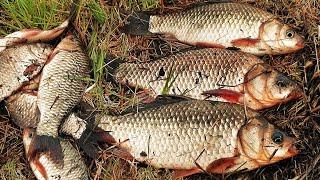 ЛОВЛЯ КАРАСЯ ПОПЛАВОК ПРОТИВ ДОНКИ КАРАСЬ ПРОСНУЛСЯ И ЖИРУЕТ Любимая рыбалка как в детстве