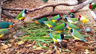 Beautiful Birds In The World