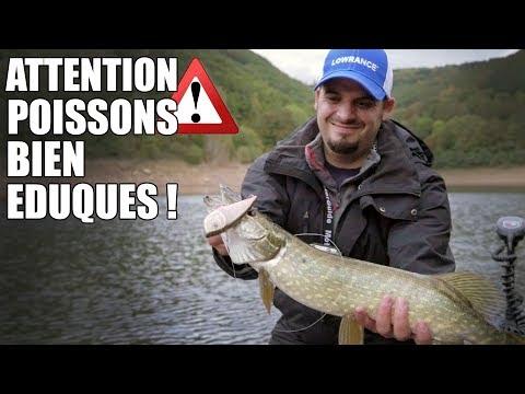 ATTENTION, POISSONS BIEN EDUQUES  ! (feat Feeling Fishing)