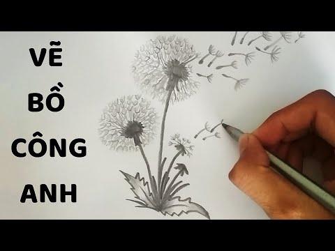 Vẽ Bồ Công Anh bằng bút chì – How to draw a Dandelion