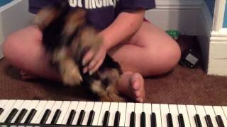 Dog plays muffin man