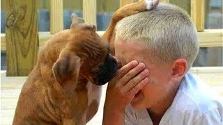Dogs 🐶 and cats 🐱 & owners 👨 are the best friends 🌟 Funny Cat and Dog compilation