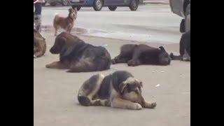 В этом году, согласно контракту с муниципалитетом, надлежит отловить около 200 собак