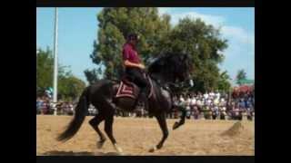 MENEGIAS ETOLIKO SPANISH&MINORQUIN HORSES TRAINING(E.C.T.A.S)