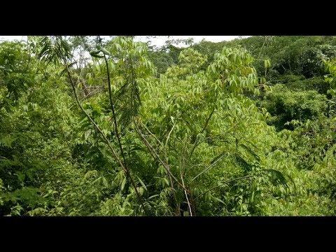 lokasi baru tempat pikat burung cabe cabean tes suara pikat baru