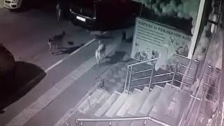 Кот против собак