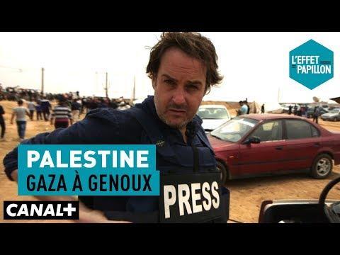 Palestine : Gaza à genoux - L'Effet Papillon – CANAL+