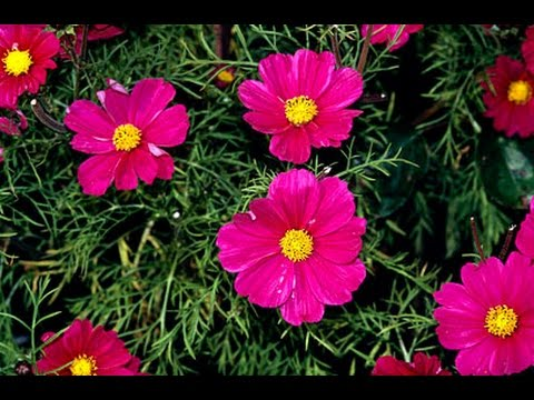 Best Cheap Hardy Perennials Annuals Flower Plant That Attracts