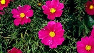 Best & Cheap Hardy Perennials / Annuals Flower Plant That Attracts Butterflies