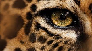 Дикая Природа Глаз леопарда National Geographic