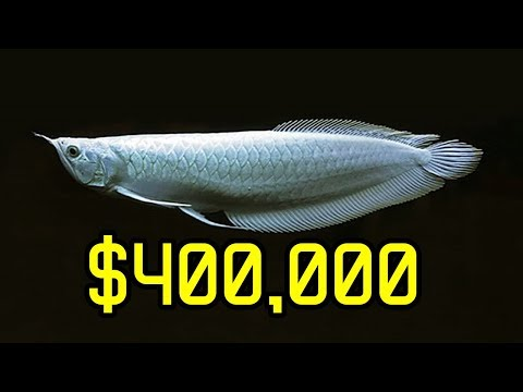 10 Expensive Fish That Can Make You Rich