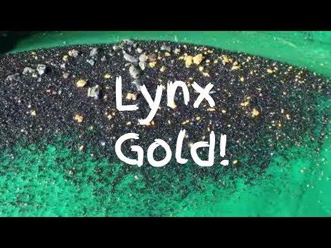 Arizona Gold Panning in Lynx Creek