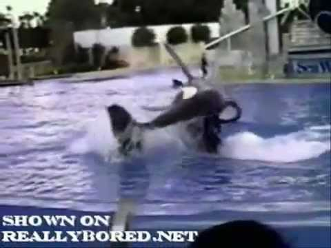 whales in captivty Killer whales: what to do with captive orcas kalina, the first captive born orca, and her calf by matt walker editor, earth news it is also debatable what to do with those orcas, also known as killer whales, that remain in captivity.