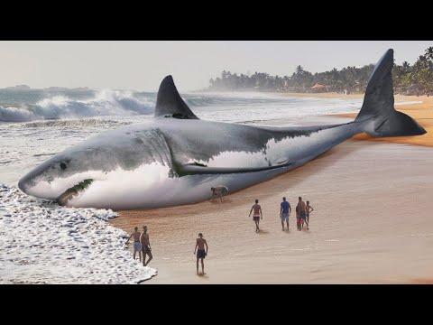 Как белая акула заставила исчезнуть мегалодона?
