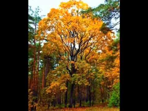 Bosque templado caducifolio youtube for Arboles de jardin de hoja caduca