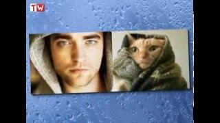 20 фотографий котов, которые выглядят как модели))