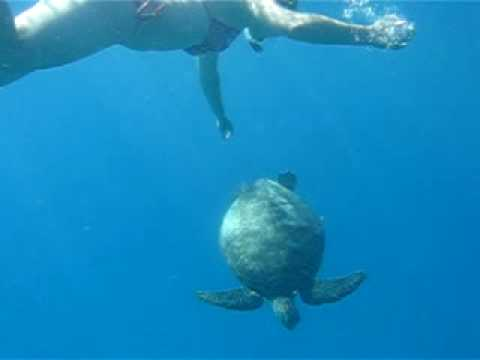 Lida und die Schildkröte - Lady Elliot Island