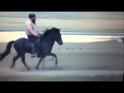 Boi - beautiful Icelandic gelding with high movements FOR SALE