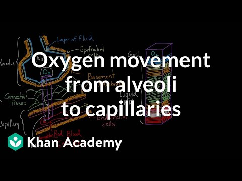 Oxygen movement from alveoli to capillaries | NCLEX-RN | Khan Academy