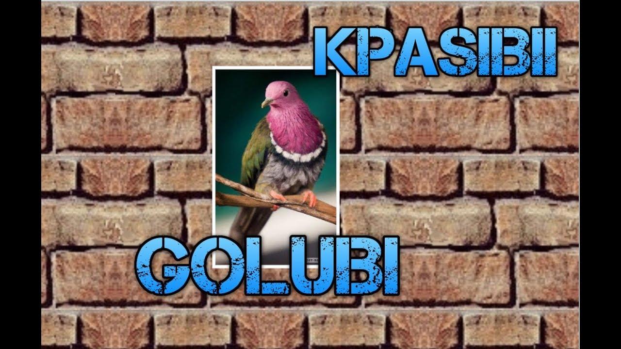 Голуби. | Красивые фото голубей - YouTube