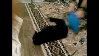 Кошку бьют по жопе:D