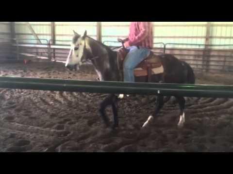 Gray horse working