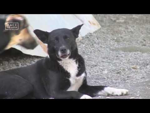 Приют для собак | Новости сегодня | Происшествия | Масс Медиа