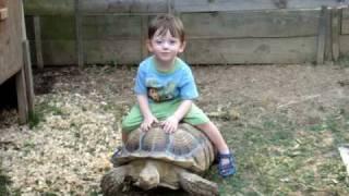 toddler riding sulcata tortoise turtle baby Nic