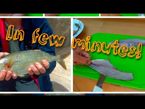 How To Filet Salema Porgy (Xilpa)