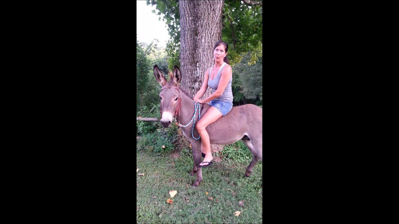 Mexico donkey porn