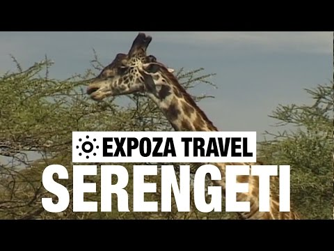 Serengeti Vacation Travel Video Guide